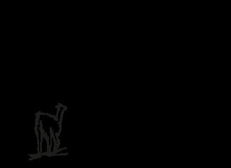 altoandinoblackllama